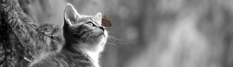 Stuhlgang Und Kot Bei Der Katze Heldenfutter